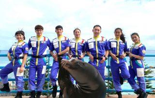 海獅巡警隊(圖/遠雄海洋公園提供)